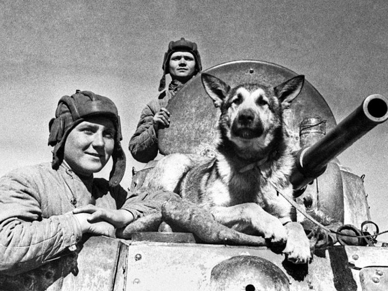 Собаки-герои: интересные факты о ВОВ