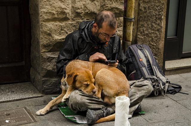 Собаки-рабы делают бизнес прибыльным ценой собственной жизни
