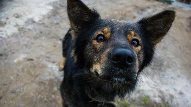 Беспородные собаки – образец преданности