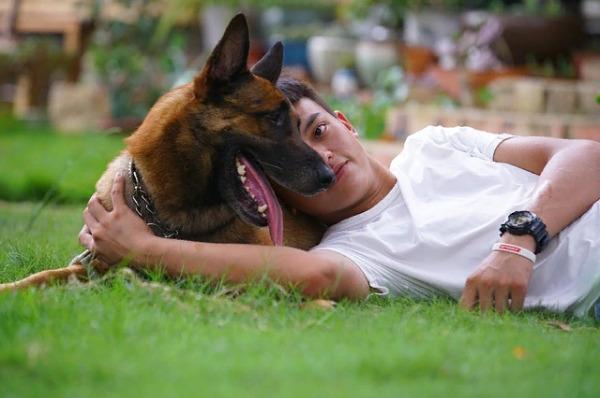 Как сделать жизнь собаке более безопасной?