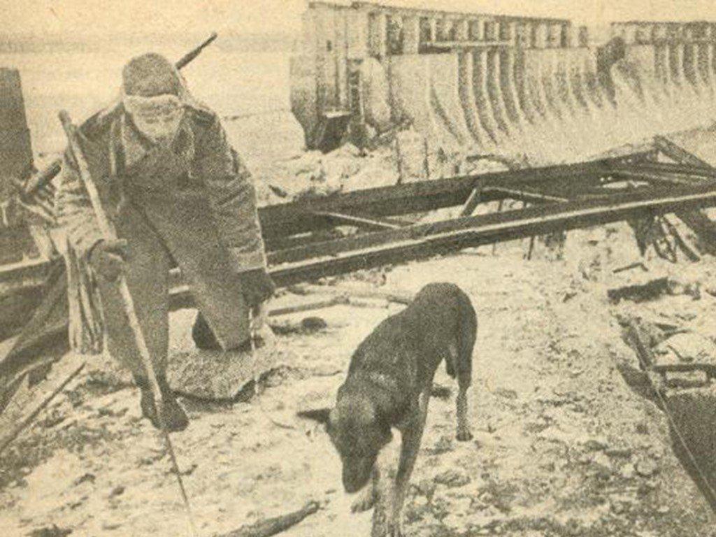 Собаки-герои миноискатели: интересные факты о ВОВ