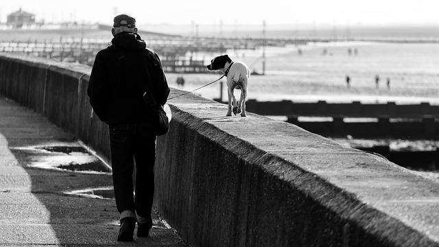 Этика современного собаковода