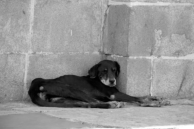 Помочь бездомному животному