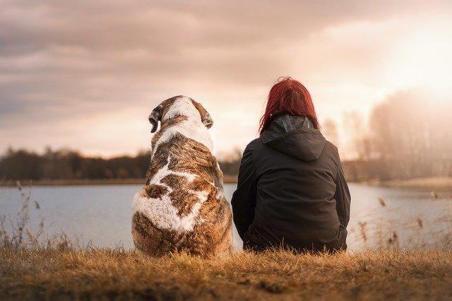 Влияние животных на нашу жизнь