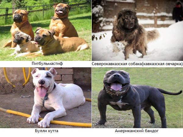 В России двенадцать пород собак признаны опасными